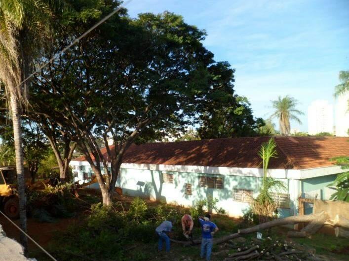 Funcionários trabalham em poda de árvore mexeriqueira (Foto: Arquivo Pessoal/Leitor)