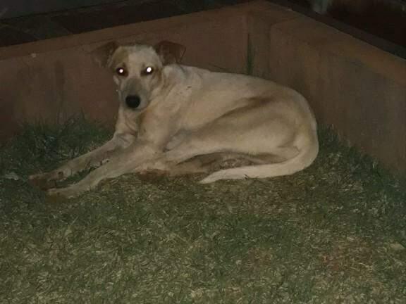 O cachorro esta aos cuidados de moradores (Foto: Direto das ruas)