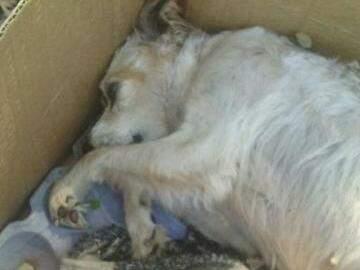 Cadela que estava com filhote entalado não resistiu e acabou morrendo após ter sido abandonada. (Foto: Reprodução Facebook)