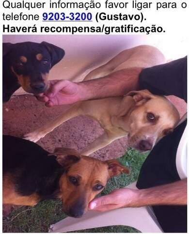 Cachorros fugiram no último dia 17. (Foto: Divulgação)