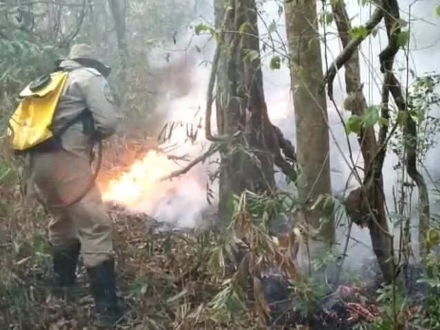 Combate ao fogo no Parque Estadual das Várzeas do Rio Ivinhema (Foto: Reprodução)