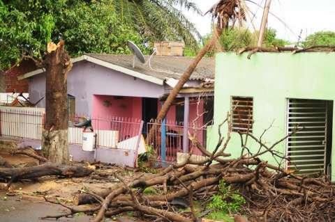 Ventos derrubaram árvores em todo canto, pelo menos 3 sobre casas