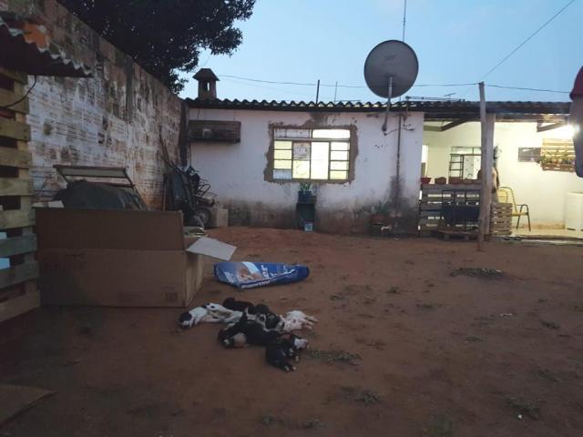 Quando a polícia chegou na residência, após receber denúncia, animais já estavam mortos.
