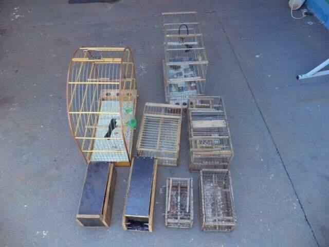 Aves eram criadas em gaiolas, ilegalmente. (Foto: Divulgação/ PMA)