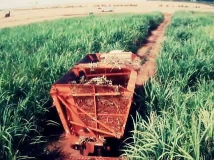 Com bom desenvolvimento, produção de milho será 53% maior este ano