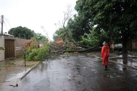 Chuva vem acompanhada de vento e derruba árvores na Capital