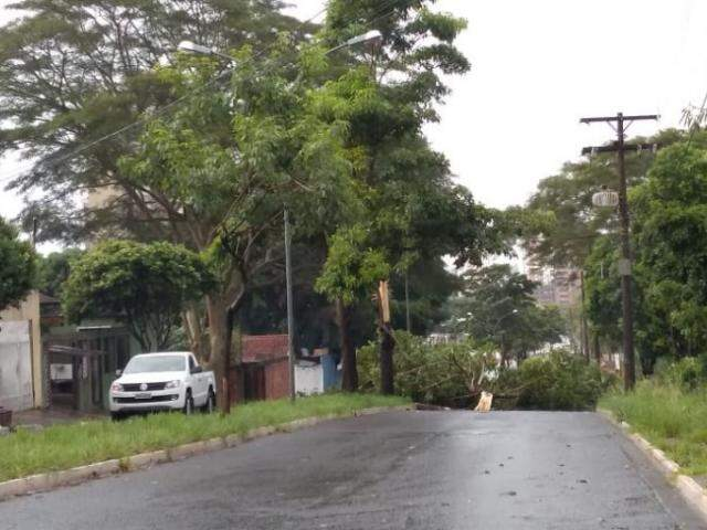 Árvore interditou totalmente a pista bairro-centro da Avenida Rachid Neder. (Foto: Mirrian Machado)
