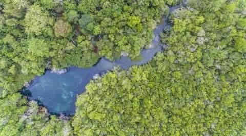 Governo vai remunerar pessoas e entidades que atuam na conservação ambiental