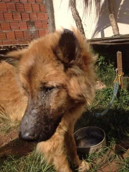 Cachorro chamou atenção da brasileira que passava pela rua.