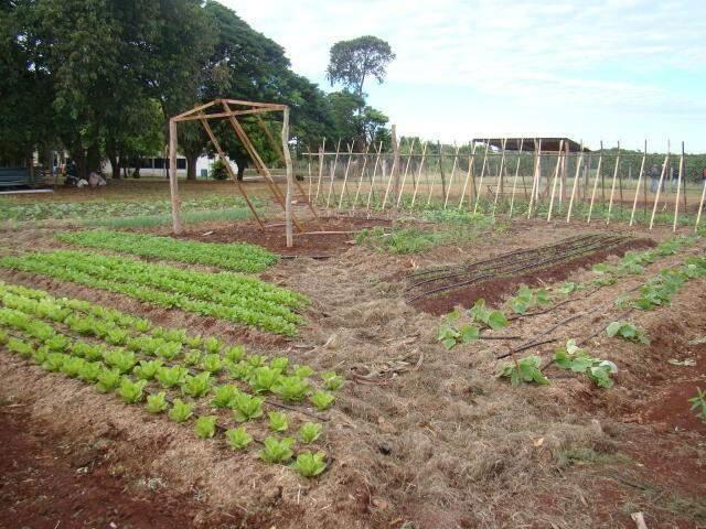 Expectativa é que hortaliças produzidas por agricultores familiares estejam sendo vendidas em MS, no prazo de um ano. (Foto: Silvia Zoche/ Embrapa)
