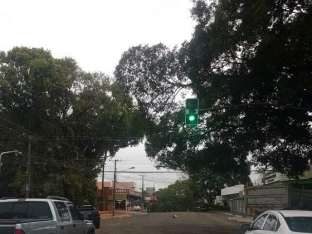 Uma das árvores que não resistiu as rajadas de vento continua interditando a Avenida Bandeirantes. Avenida Bandeirantes interditada na Capital. (Foto: Ângela Kempfer)