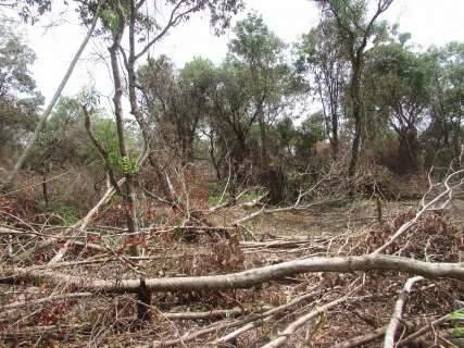 Fazendeiro é multado em R$ 56 mil por desmatar 8 hectares de Mata Atlântica