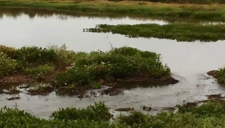As inundações no Pantanal interferem na abundância das populações como podem favorecer algumas espécies. (Foto: Embrapa Pantanal)
