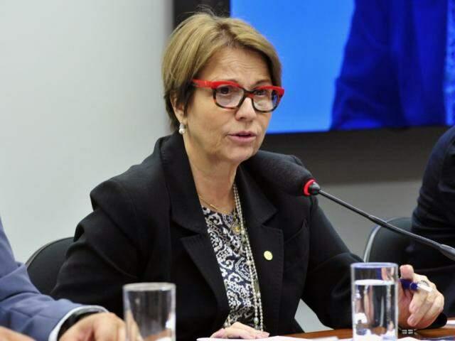Deputada Tereza Cristina (DEM) durante sessão em Brasília (Luis Macedo / Câmara dos Deputados)