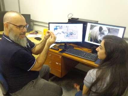 Para monitorar praga, pesquisador faz mapeamento de javalis em MS