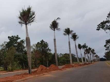 Com palmeiras replantadas, novo acesso ao Parque dos Poderes ganha cara nova