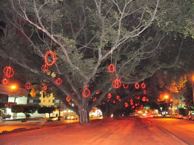 Na região central bolas vermelhas é que enfeitam as árvores centenárias. (Foto: João Garrigó)
