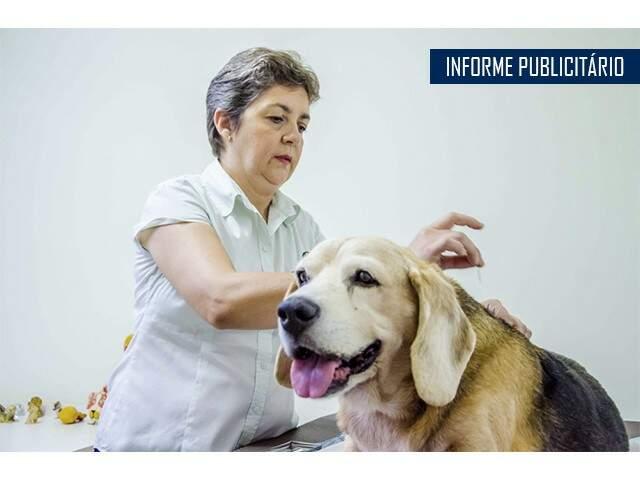 Com 25 anos de profissão, a Médica Veterinária Rosana Estrada, dedica seus cuidados aos animais que precisam de ajuda para a recuperação. (Foto: Vanessa Tamires)
