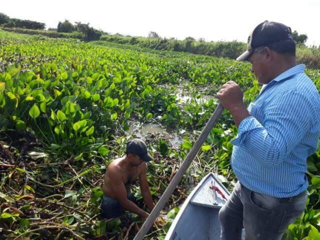 Ribeirinho precisa limpar área para barco se locomover na água (Foto: Direto das Ruas)