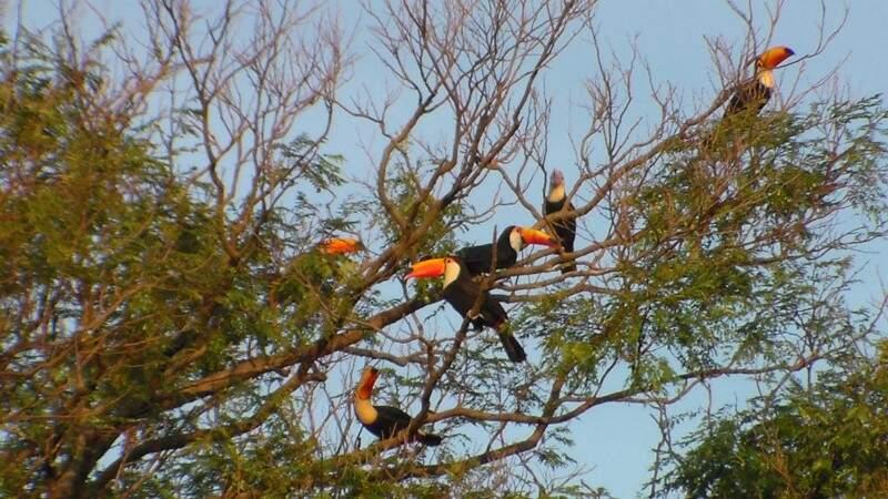 Foto enviada por leitor mostra que local serve como reduto de aves como tucanos (Foto: Arquivo Pessoal)