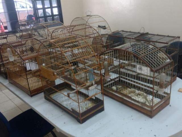Além dos pássaros, foram apreendidas nove gaiolas (Foto: Divulgação/ PMA)