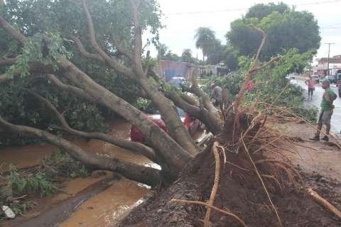 Ventos derrubaram árvore e muro sobre carros durante temporal