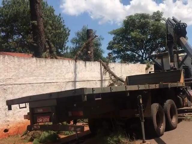 Caminhão utilizado para fazer o corte e retirada das árvores. (Foto: Henrique Kawaminami)