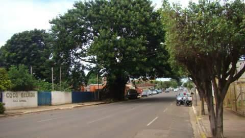 Figueira símbolo de rua Brilhante é cortada após um século