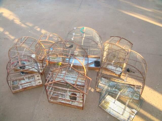 Pássaros foram trazidos para o Cras.