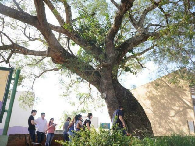 Fiscais avaliam situação de árvore localizada na Rua da Paz com a Rio Grande do Sul (Foto: Paulo Francis)