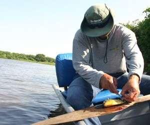 Sashimi fez da piranha um peixe valorizado na pescaria do Pantanal