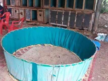 PMA flagra 60 galos feridos em rinha e 21 pessoas são presas na Capital
