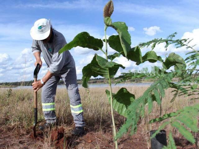 Trabalhador realiza plantio de mudas no entorno do reservatório do córrego Guariroba. (Foto: Divulgação)