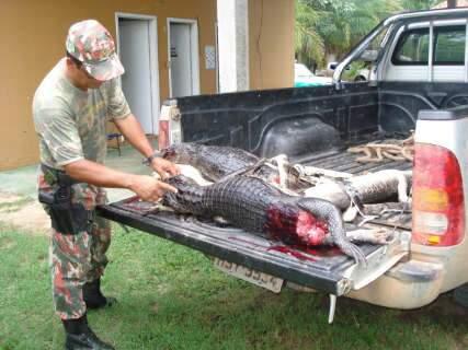 Polícia prende 5 pessoas por caça ilegal e apreende jacares abatidos
