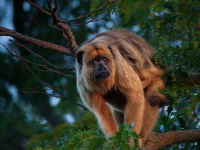 Reserva conta com mais de 60 espécies de mamíferos (Foto: Divulgação IHP)