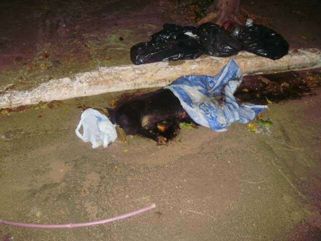 Animal deve ser recolhido na hora da coleta de lixo de amanhã. (Foto: Aline Gonzaga)