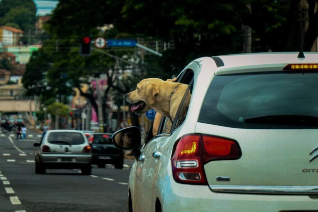 De boas, só olhando os motoristas pela janela do carro (Foto: Henrique Kawaminami)
