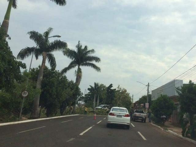 Avenida foi interditada para o corte da árvore. (Foto: Direto das Ruas)