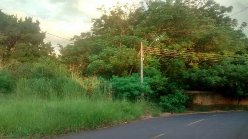 O mato alto gera preocupação dos moradores na rua de grande movimento e com intenso fluxo de passagem de crianças. (Foto:Direto das Ruas)