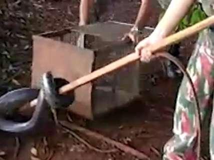 Sucuri de 3,5 metros é capturada pela PMA perto de quartel