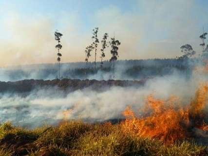 Incêndio destrói 50 hectares de fazenda após colheita do milho