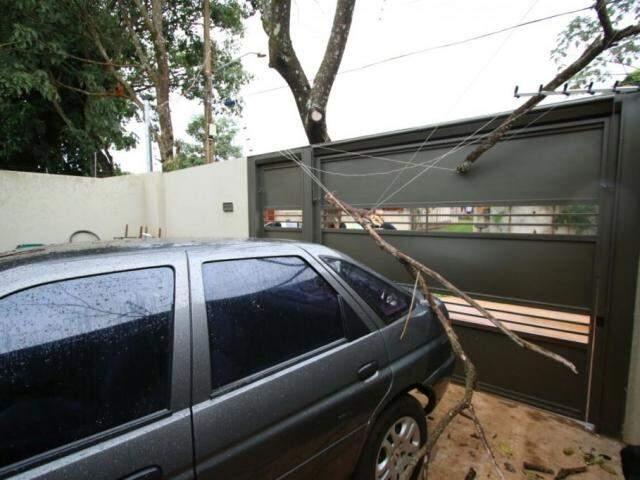 Árvore caiu em cima de portão e veículo, no Jardim Aeroporto  (Foto: André Bittar)