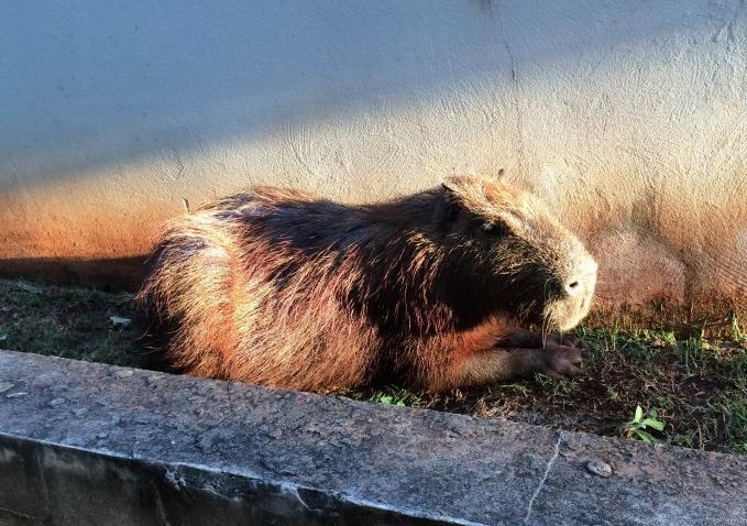PMA alerta que não se deve alimentar animais silvestres. (Fotos: Repórter News)