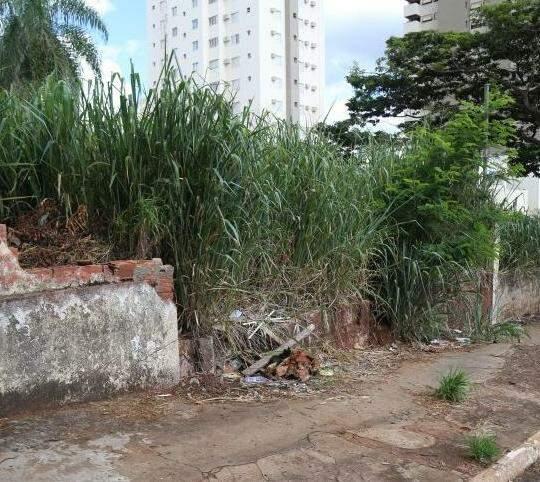Terreno com infestação de caramujos fica na rua 25 de Dezembro esquina com a Eduardo Santos Pereira (Foto Fernando Antunes)
