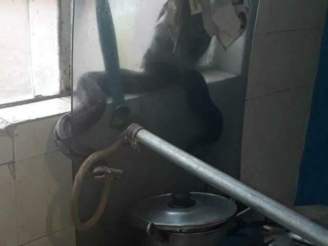 Cobra foi capturada e levada para área de mata (Foto: divulgação/Corpo de Bombeiros)