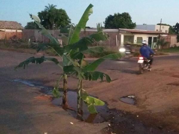 A bananeira foi colocada como forma de chamar atenção do poder público. (Foto: Direto das ruas)