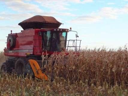 Produtividade aumenta 50%, mas preço do milho continua baixo em MS