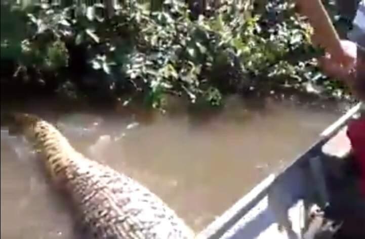 Cobra estava cheia e por isso grupo aproveitou para perturbar o animal. (Foto: Facebook)