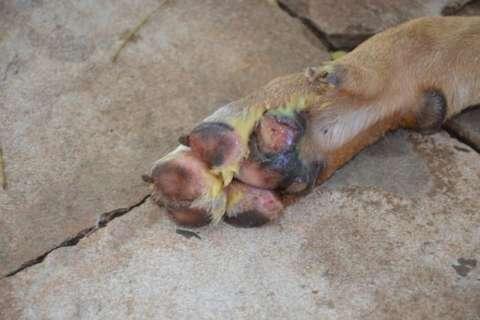 Ao responder sobre Scooby, Bernal sinaliza que cão poderá ser sacrificado