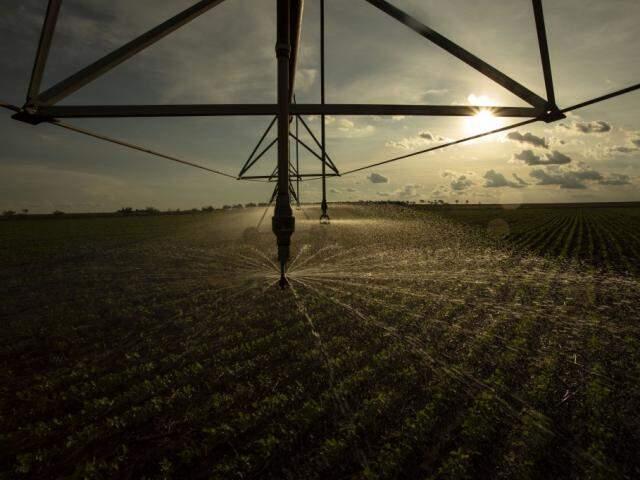 Irrigação ao entardecer na Fazenda Perdizes, em Campo Grande. (Foto: João Garrigó)